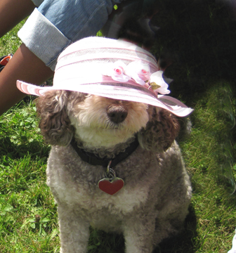 Truffle knows that a hat is always suitable attire for a garden tour or garden party.