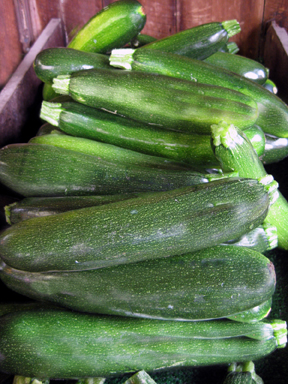 zucchini web