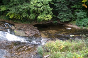 Sawmill River web