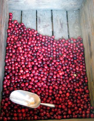 cranberriesweb